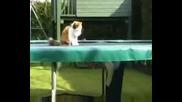 Котка на трамплин(голям смях)