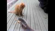 Катеричка краде от храната на котка:)