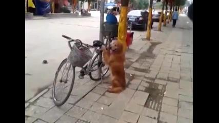 Това колело крадците ще го заобикалят! Смях!