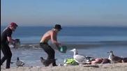 Смях ... Гларуси нападат хора на плажа