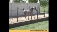 Arabian Horses .wmv