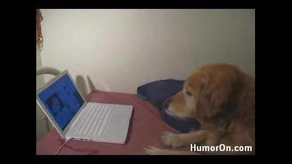 Котка Дразни Куче По Лаптопа