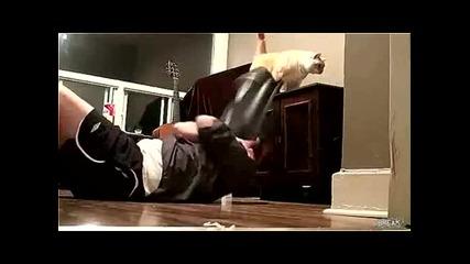 Отмъщението на котката