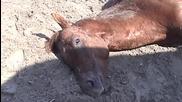 Demolition Derby - Peta's Investigations Expose Horse-racing Cruelty