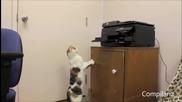(смях) котки се изправят срещу принтери