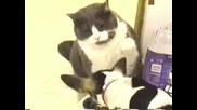Котка и куче се бият за храната си