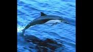 Dolphin2.wmv