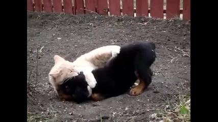 Ротвайлерче и котенце