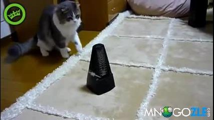 Коте срещу махало !