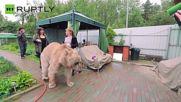 Стьопа - мечката, която живее с хора