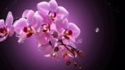 Най-прекрасните орхидеи! ... ...
