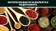 Интересни факти за билките и подправките