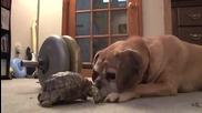 Костенурка хапе куче за нослето .