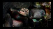 шимпанзе-официален 3d трейлар (2011)