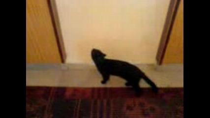 Котенце Си Отваря Само Вратата