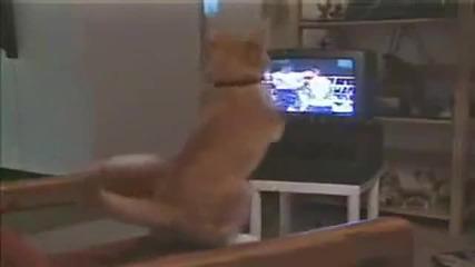 Реакцията на една котка когато гледа бокс ?!?