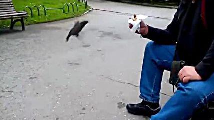 Месорош и Птиците