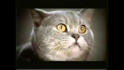 Супер коте в реклама на Whiskas
