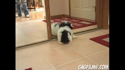 Кученце си играе