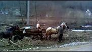 18+ / Румънски Цигани Прекарват Дърва ~ Жестоко Бият Животните !