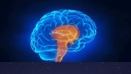 Тест - Какъв тип е мозъкът ти ?
