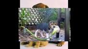 Снимки На Готини Кученца