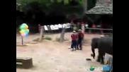 Слон играе дартс