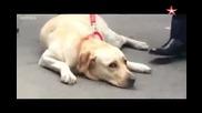 Повторна среща на сляпа жена с нейното куче водач