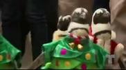 Пингвини облечени като Дядо Коледа