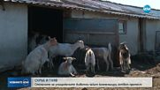Стопаните на евтаназираните животни готвят протест