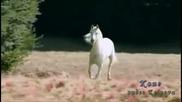 Красотата на конете