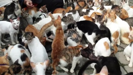Ultimate cat lover shares home with over 250 felines in Indonesia