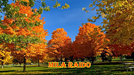 Шансон Красивые Песни! Осень и Любовь!