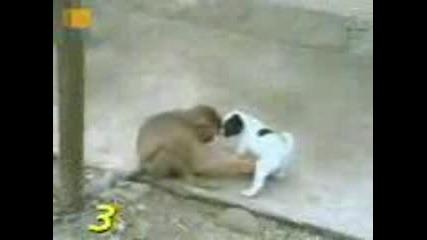 Маймуни Се Смеят На Куче !