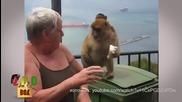 Маймуни-джебчийки в акция