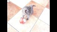 Коте и коледна топка