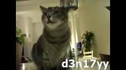 Котка пие вода много странно Смях