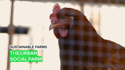 Sustainable Farms: When communities and urban farming come together