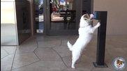 Забавно Куче Прави Полезни Трикове ( Jesse )