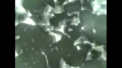 Атака от акула (remi Gaillard)