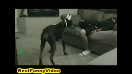 Куче захапва пич по слабините Смях