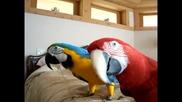 Папагалчетата Кона и Рио са големи сладури