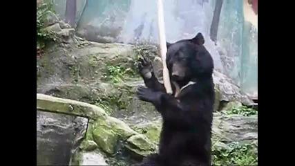 Kung Fu Bear - Кунг Фу Мечка