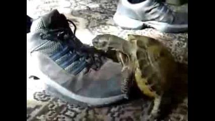 Костенурка обладава Обувка (+16)