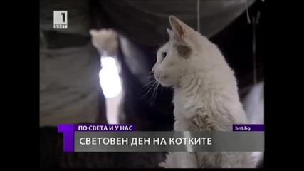 1-ви март световен ден на котката