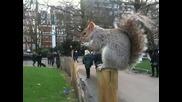 Катерица пред Бъкингамският Дворец !