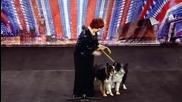 ! Жена танцува с кучета ! Великобритания търси талант 2011