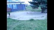 Picture 035.avi