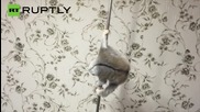 Russia: Poledancing lemur heats up the internet!
