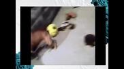 Какво се случва когато куче се прави на отворено на котка !